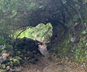 【ハワイ】寂々と荒ぶる黒砂ビーチ「ポロル渓谷」ハワイ島